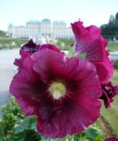 Schloss Belvedere, Wien, Österreich