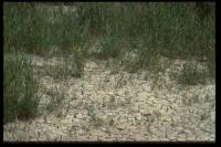 Aufgerissener Boden, La Capeliere, 2002