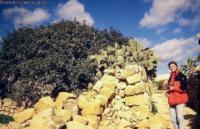 Zweitgeduldigste Frau der Welt, Gozo, Malta, Jan. 2000