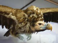 Naturhistorisches Museum, Wien, Österreich