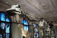 Dinosaurier, Naturhistorisches Museum, Wien, Österreich