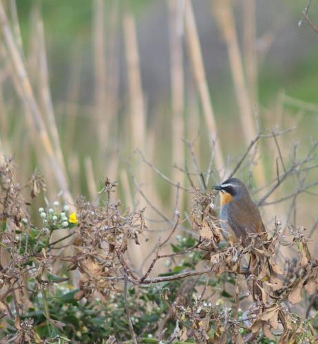 P8060344 Bird