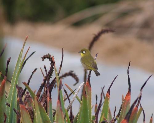 P8060374 Bird