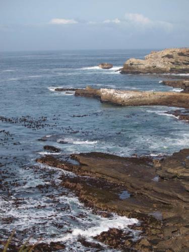 P8060400 Coastline
