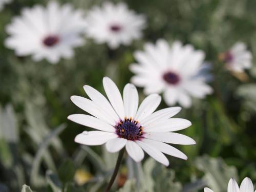 P8060429 Flowers