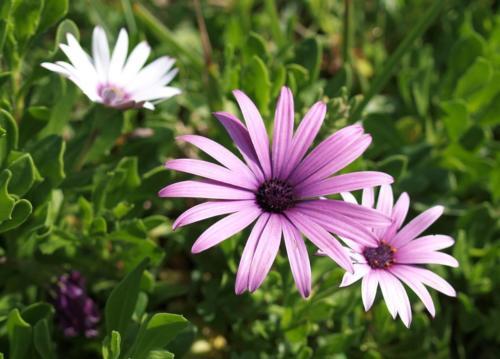 P8060435 Flowers