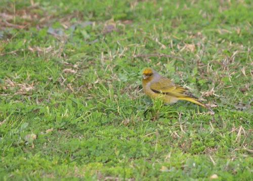 P8060450 Bird