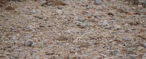 P8070485 Bird (1)