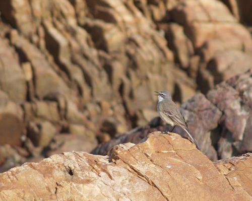 P8070554 Bird (1)