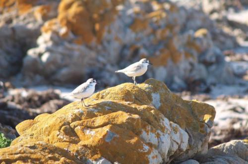 P8070596 Birds (1)