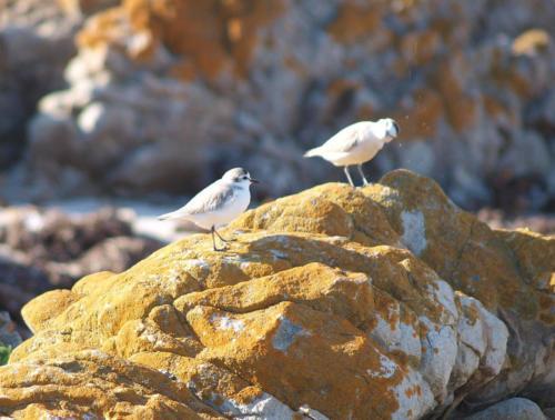 P8070601 Birds (1)
