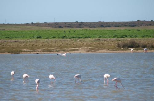 P8080720 Flamingos