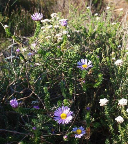 P8090791 Flowers