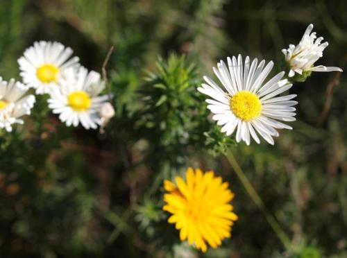 P8101151 Flowers
