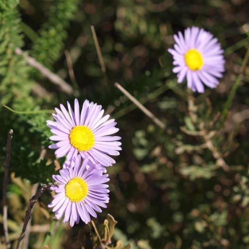 P8101154 Flowers