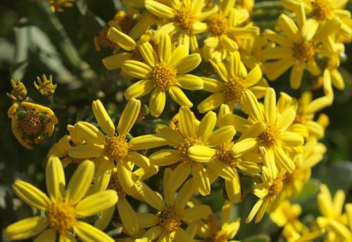 P8101156 Flowers