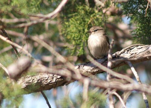 P8111309 Bird