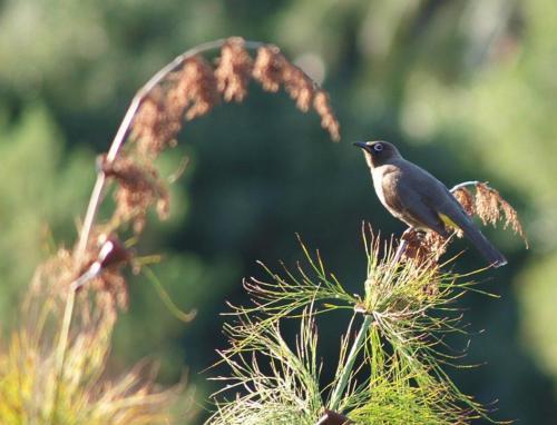 P8111345 Bird