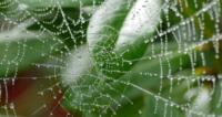 Wassertropfen in SpinnwebenP1020465