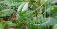 Wassertropfen in SpinnwebenP1020471